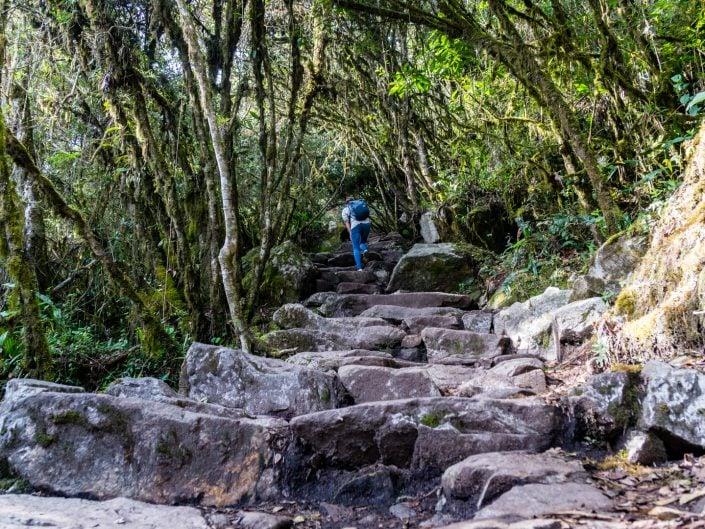 Machu Picchu, Peru, Aguas Calientes, Ruinen, Lamas, Hidroelectrica, Minibus, Cusco, Train, Zug, Montana, Huyana Picchu,