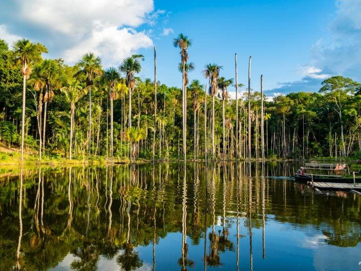 peru, amazonasgebiet, puerto maldonado, lake sandoval, tambopata nationalpark, macaw, clay lick, jaguar, gold, boat, Boot, Fluß, river, cayman, snake, spider, Rio madre de dios, rio tambopada