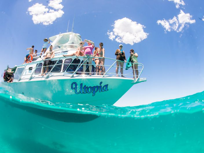 Ningaloo, Coral Bay, Reef, Riff, Hai, Fische, Snorcheln, Snorkeling, Boattrip, Boot, Manta
