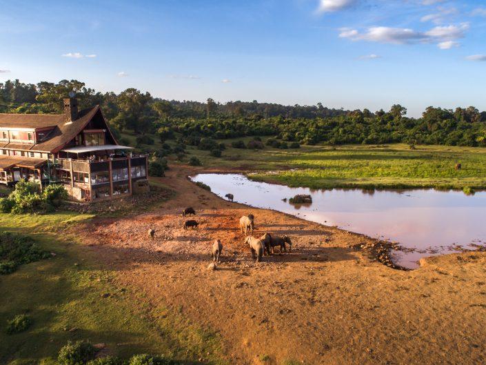 Kenya, Safari, Massai, Lion, Löwe, Aberdare, Nationalpark, Countryclub, Animals, Tiere, Ark, Leisure Camp, Eastafrica, Ostafrika, Kenia